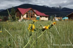 Invasive plant, visitor info centre, tourism