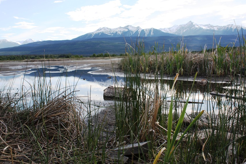 Where has all the water gone? Valemount's Cranberry marsh muddy; wells run dry