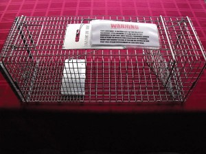 The Village has purchased two humane cat traps for use in town. (above)