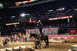Tom Ryan competing in the Calgary Stampede Cowboy Up Challenge