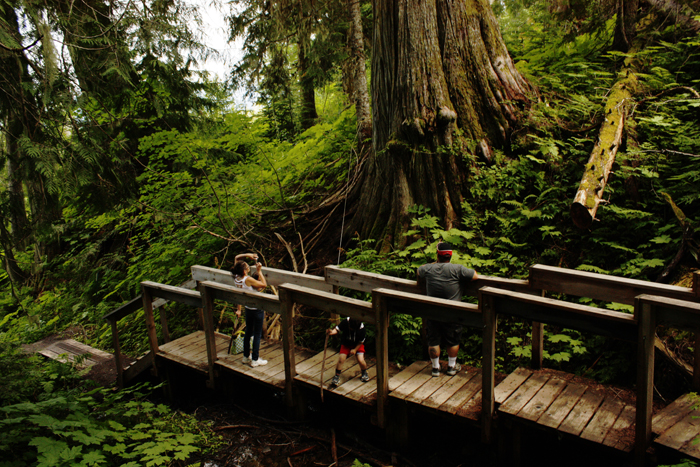 Ancient Forest boardwalk improves access to a Robson Valley wonder