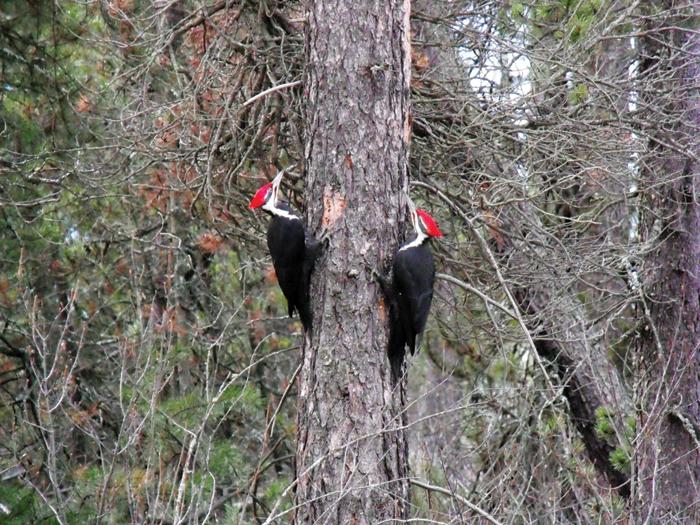 McBride, Valemount Community Forests united for timber review