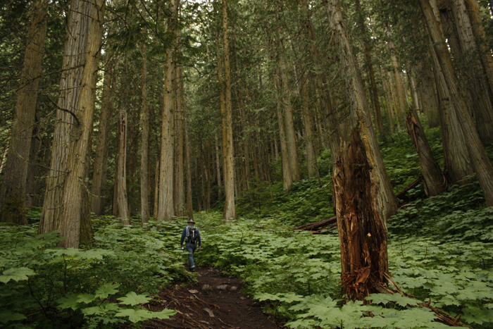"""Ancient Forest: a """"new"""" Canadian wonder"""