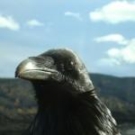 Eye of the Raven Chris D'Alessandro Dunster Valemount McBride column