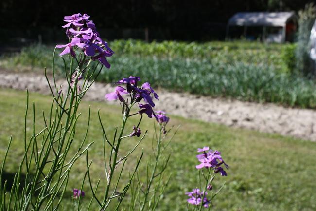 food farm garden valemount dunster mcbride