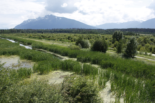 Valemount Cranberry marsh WMA wildlife sanctuary Starratt summer