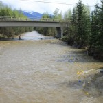 Valemount, Valemount Children's Acitivty Socity, annual duck race, Swift Creek, high water level, fast current, upper fraser basin, water safety