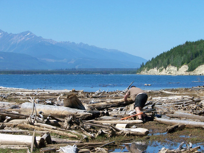 Valemount, Lumber Mill, reclaimed wood, dome creek, ancient forest, robson valley