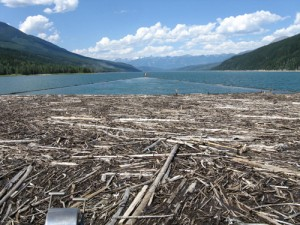Kinbasket, Robson Valley, dead wood, drift wood, debris management, BC hydro, Spaz Logging, valemount marina