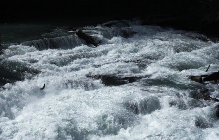 Salmon leap at Rearguard Falls near Valemount – The Rocky ...