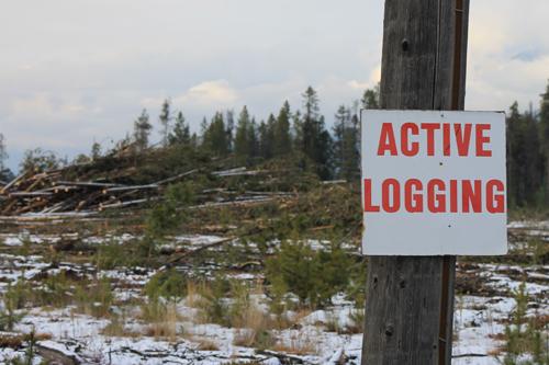 Cedarside logging upsets some residents