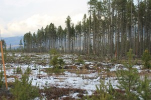 Valemount Community Forest Corporation, Valemount, Robson Valley, community wildfire protection plan, cedarside