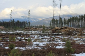Valemount Community Forest Corporation, Valemount, Robson Valley, community wildfire protection plan, cedarside