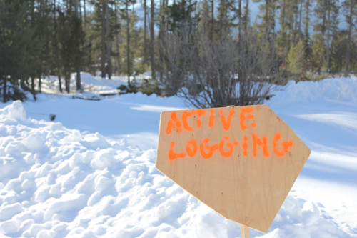 active logging, logging, sign, forestry, forest