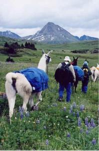 llama, hiking, valley, guide