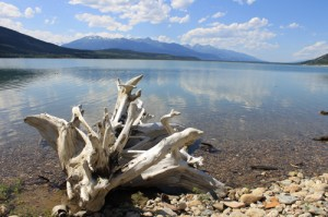 Kinbasket driftwood water lake