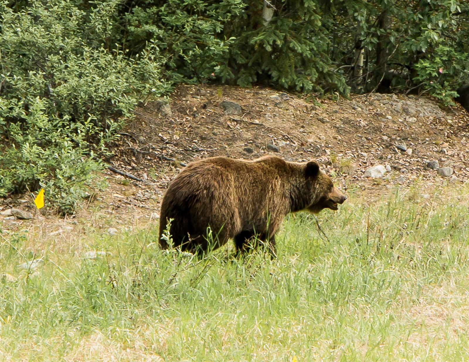 Crown lays charges for 2014 Grizzly slayings
