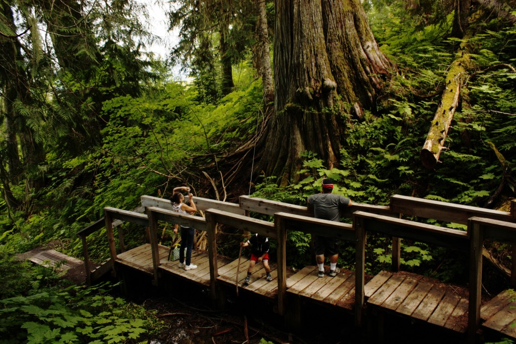The Ancient Forest boardwalk. Photo by Laura Keil