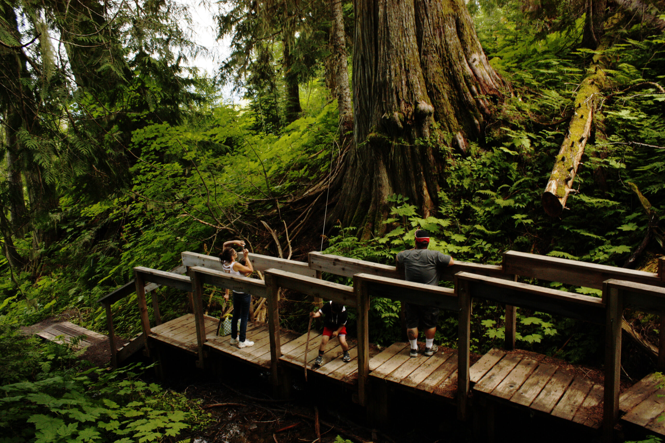 Big scale photo display of Robson Valley's Ancient Forest