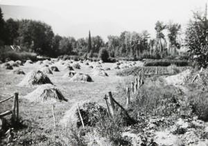Pawloske's haystack IMG_6002_haystacks