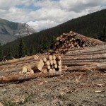 Logging on 5-mile by the community forest