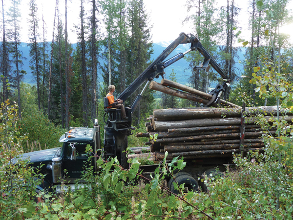 Dunster Community Forest looks to join Valemount, Carrier in stewardship plan