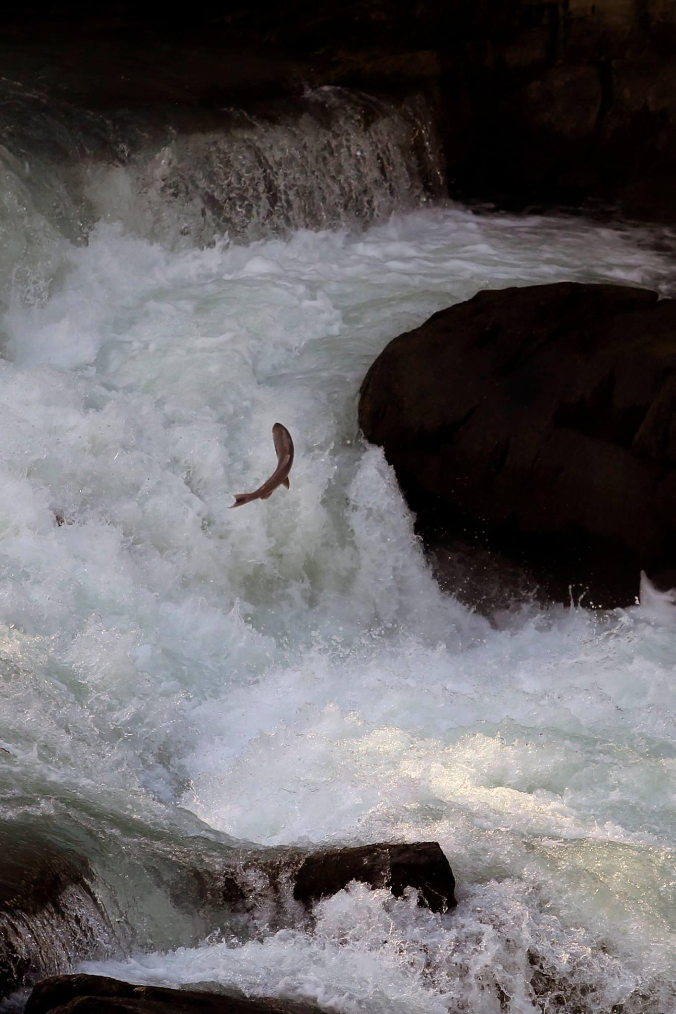 Justin Hooke salmon rearguard (1)