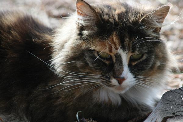 cat stock image_3635aa