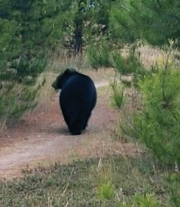 Truth or bear?