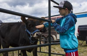"""Mica Pelletier pets this friendly cow at the petting zoo. """"Moo!' / MADDI PICKERL"""
