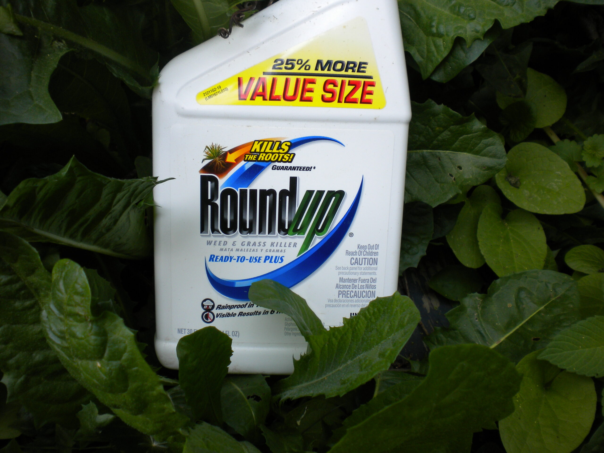How does glyphosate affect your health?