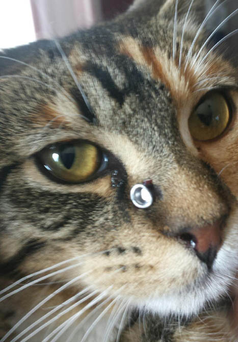 Pellet gun cruelty hurts feline, family