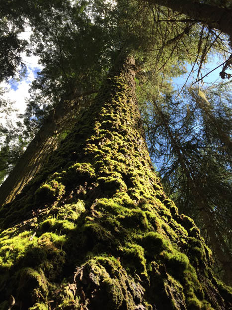 Rare species uncovered at Ancient Forest