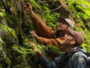 Photo courtesy Darwyn Coxson: Curtis Bjork (Univ. of Idaho) and Hayden Yeomans (UNBC student) conducting plant biodiversity assessments along the Ancient Forest trail.