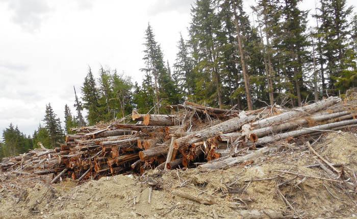 McBride Community Forest regains its footing: AGM