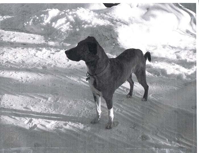 Lost dog found: Moka's story