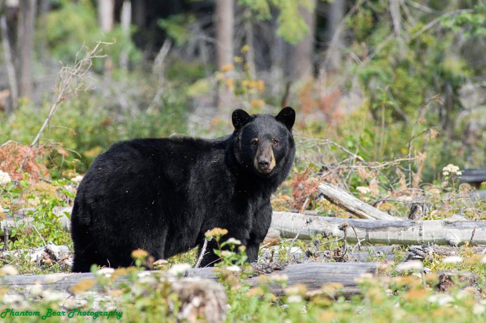 Bear season! Remove bird feeders, garbage, conservation officers warn