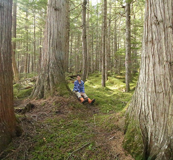 Pellet company under the microscope for old-growth logging plans