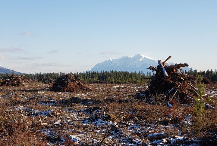 Robson Valley burn pile data show 95 permits