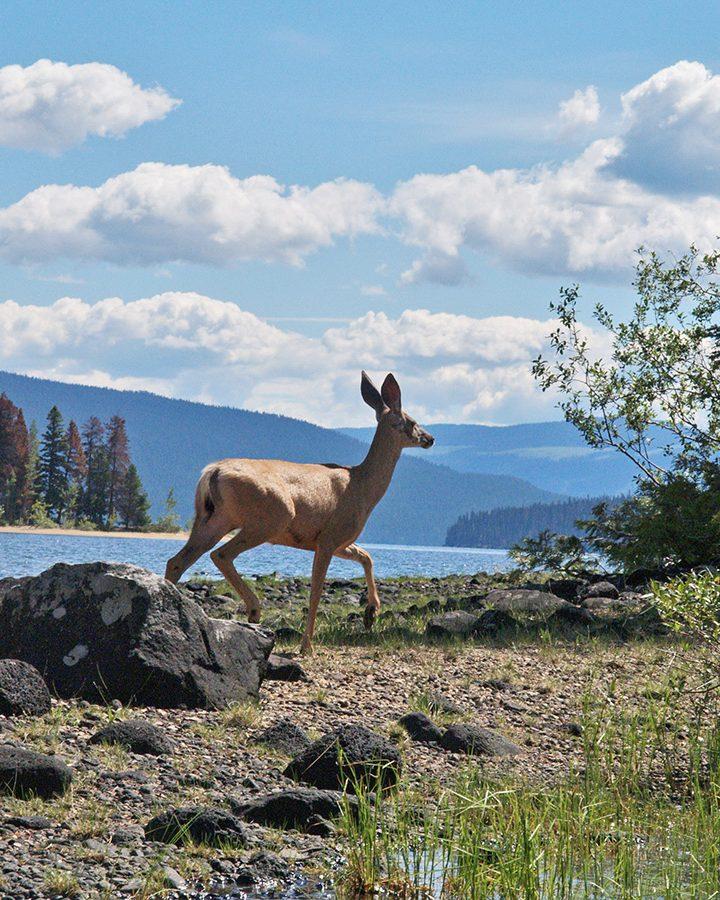 Watch for deer: rutting season is here
