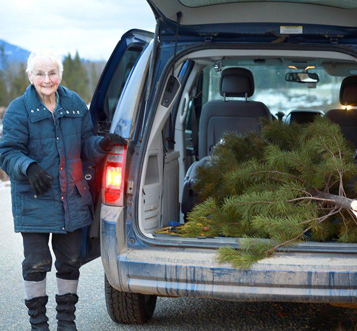 Snapshot: One senior's Christmas tree trek