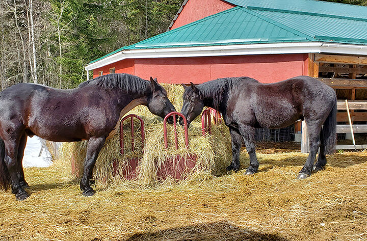 Horse brothers reunited after retirement from Vancouver Police