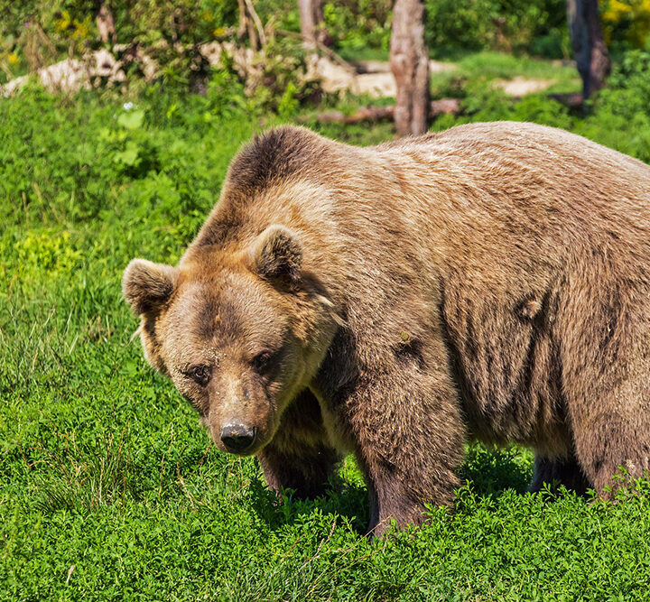 Conservation warns residents to be bear aware