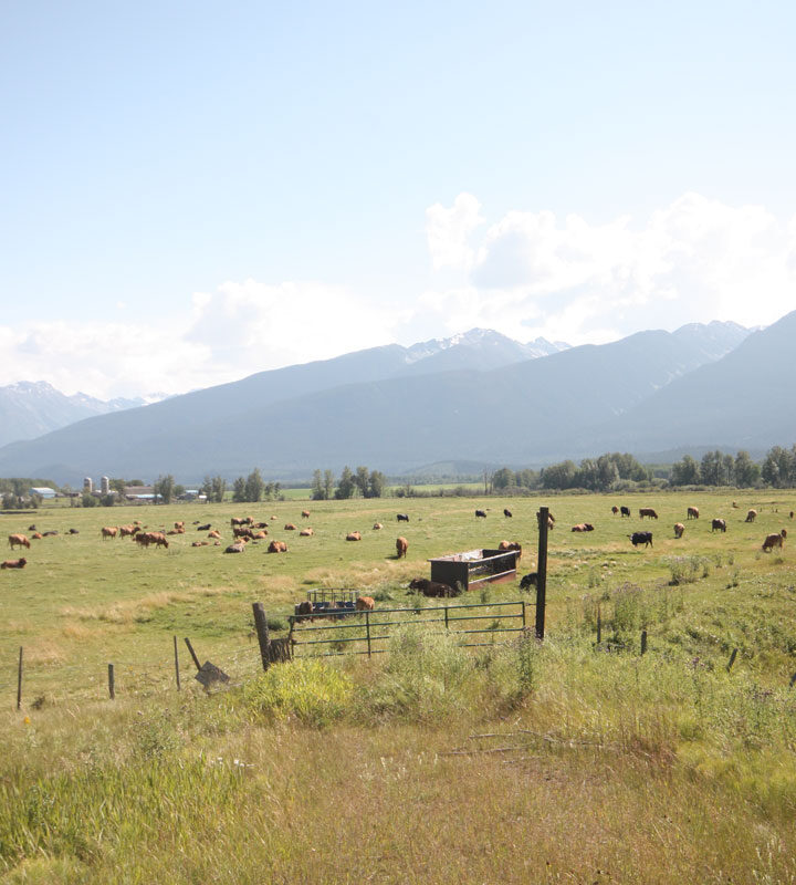 B.C. changes ALR rules to allow more dwellings on farms