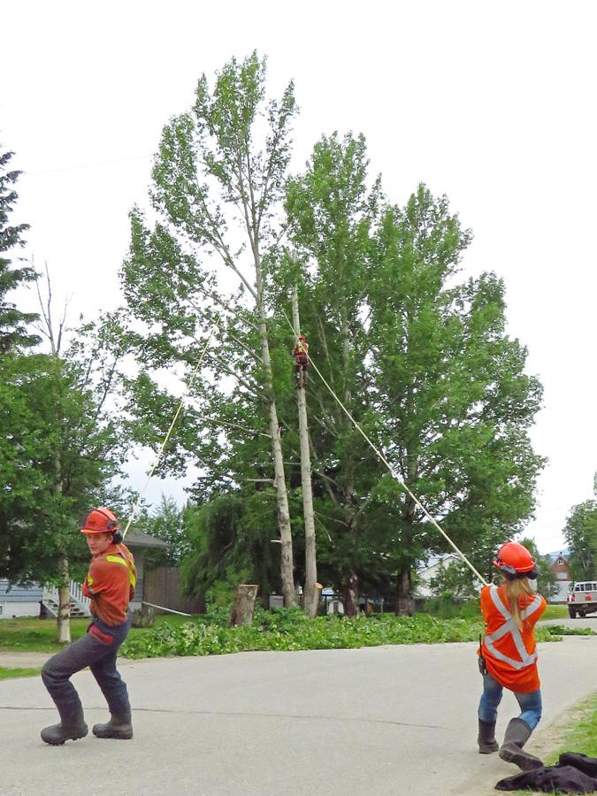 Tree removal on 5th Avenue McBride