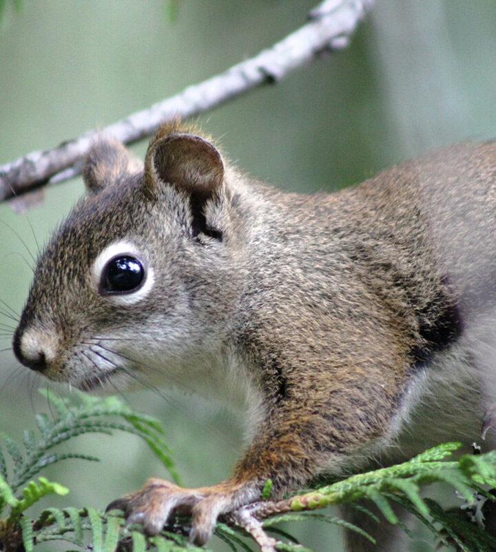 Critter curiosity