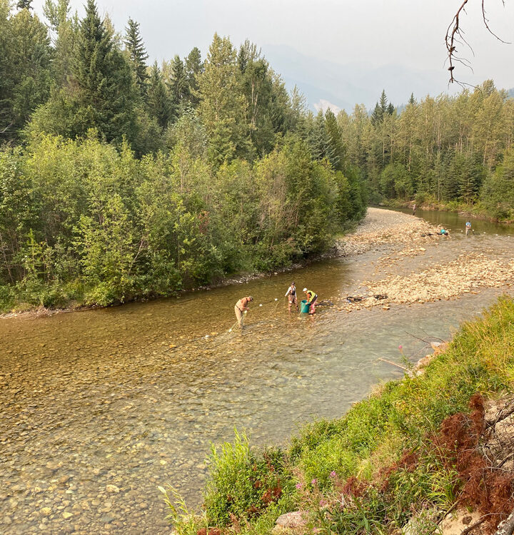 First steps towards Swift Creek salmon repopulation