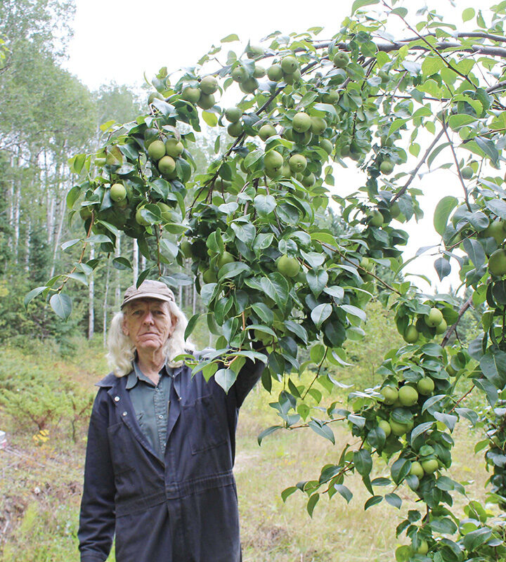 Local pear tree still going strong at 65 years